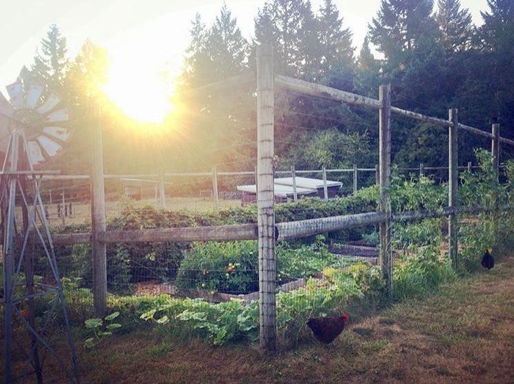 Garden Tweaks and Growing from Seed