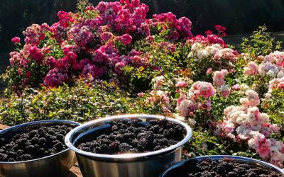 The Rhythm and Pleasures of Life with a Garden